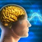 «Les effets potentiellement délétères d'Internet sur la mémoire individuelle doivent aussi être soulignés»