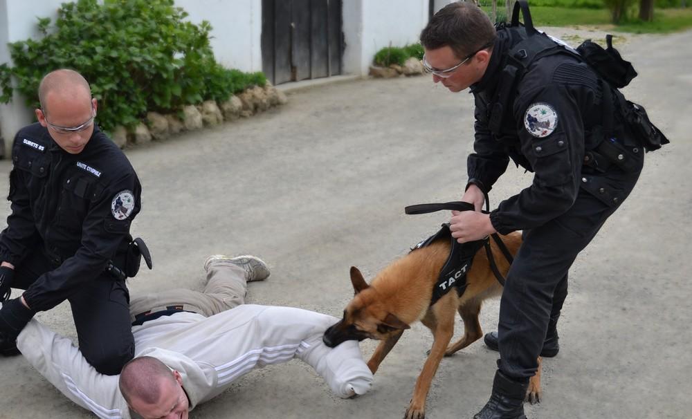 formation maitre chien