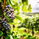 Le marché du vin se premiumise et se globalise