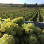 Vinovision 2017: ces professionnels du vin misent sur l'export