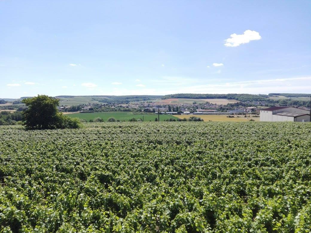 Domaine du Champagne Piot-Sévillano