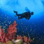 TribloO s'appuie sur sa communauté pour référencer les centres de plongée