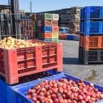 Prix de l'énergie en baisse, coûts de production agricoles allégés
