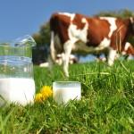 Des exploitations laitières davantage regroupées