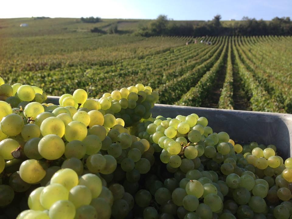 Vignerons indépendants de champagne