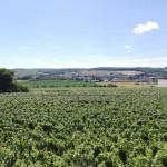 Les vignerons indépendants de Champagne s'investissent en faveur de l'environnement