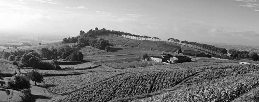 Paysages du crémant de Bourgogne