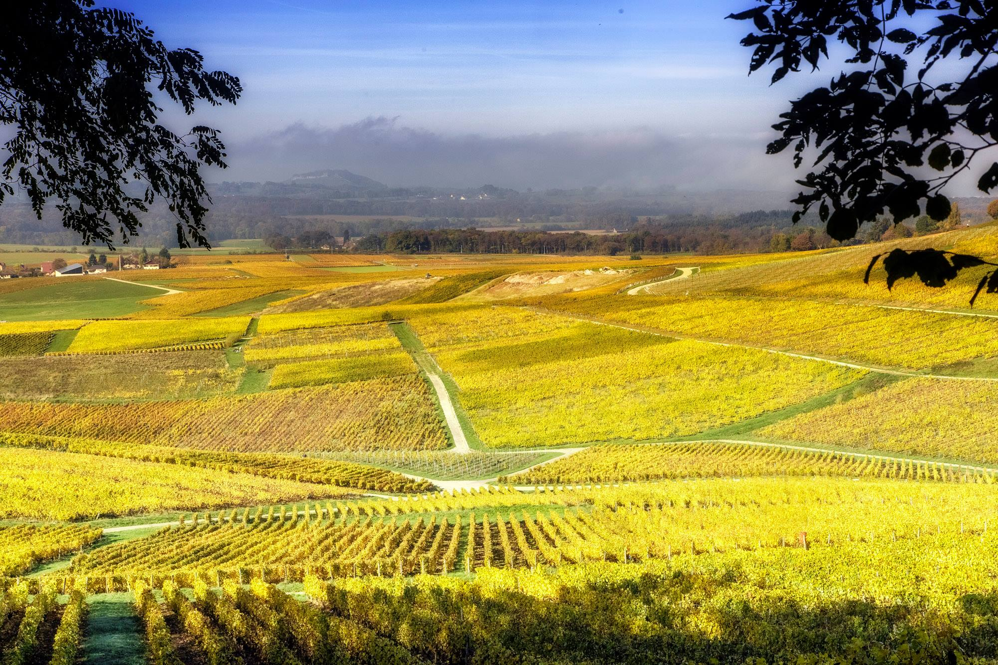 Vignobles - Vin jaune - Jura